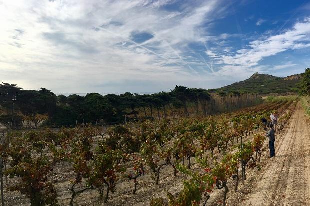 conversion biologique pour le domaine viticole des embiez