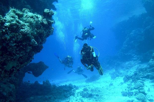 Plongée île des Embiez avec le Centre de Plongée de l'île des Embiez (CPIE 83)