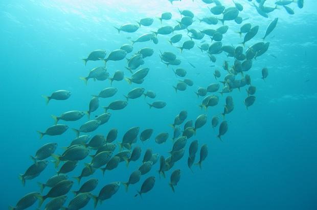 plongée méditerranée CPIE 83