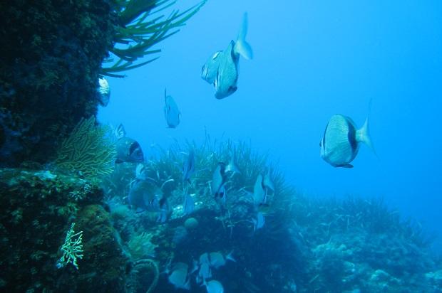 plongée sous marine île des Embiez avec le CPIE 83